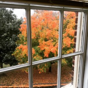 Fall colors from my office window